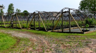 GreenBelt Plant Greenhouse