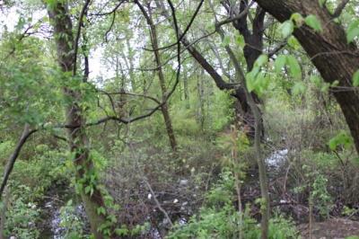 graniteville_park_swamp_Staten Island