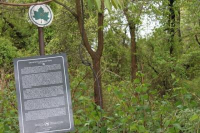 graniteville_park_swamp