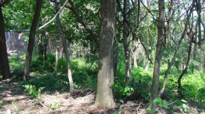 Jones Woods Park