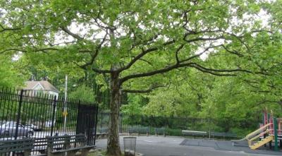 Prescott Park, Staten Island